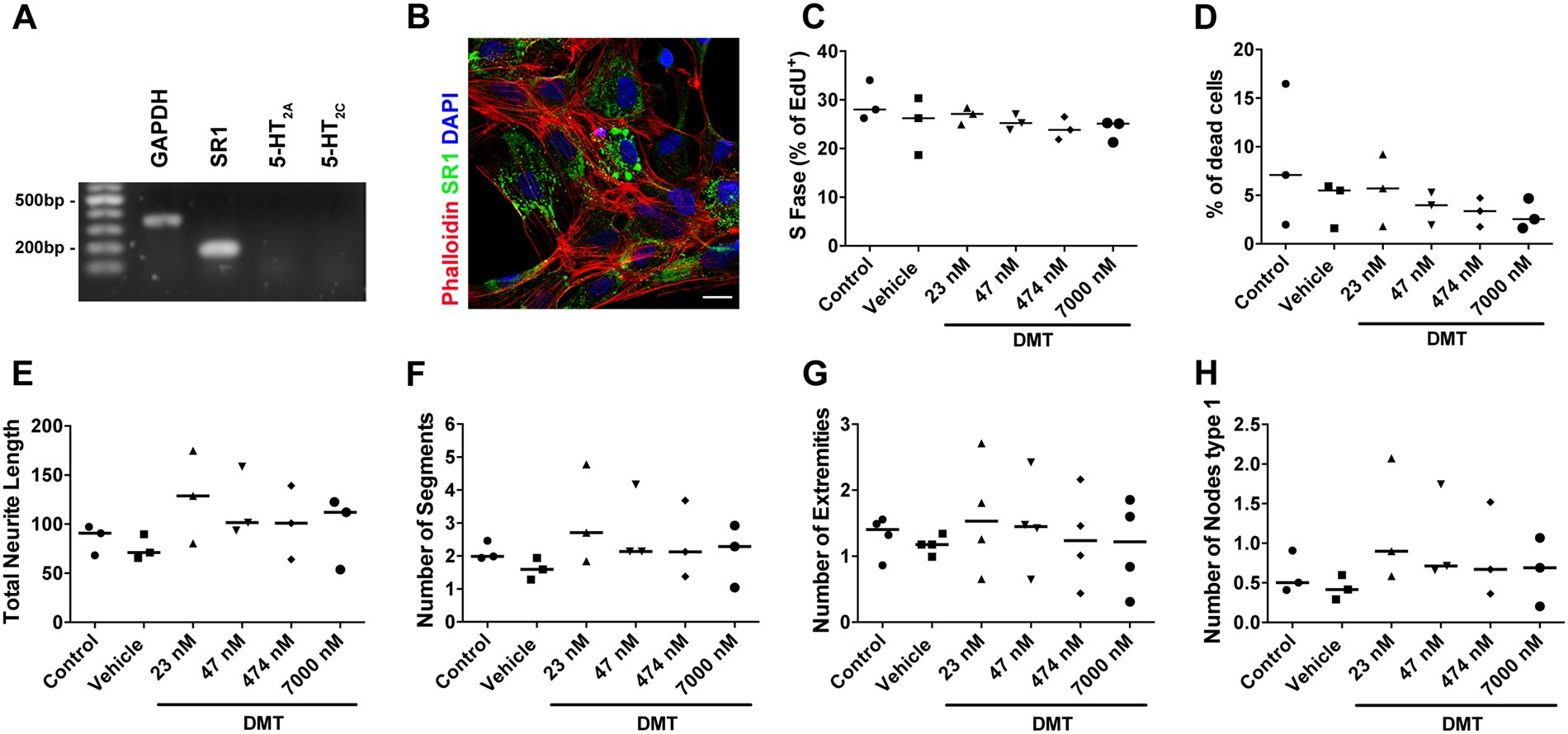 Short term changes in the proteome of human cerebral organoids induced by 5-MeO-DMT  | Scientific Reports