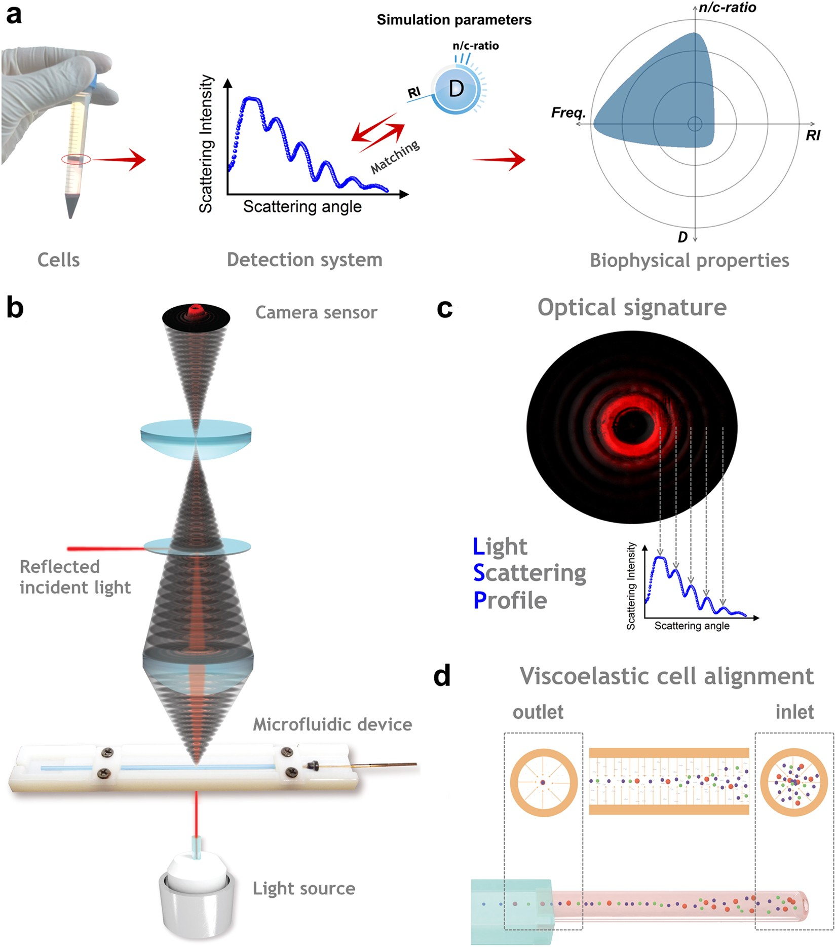 Single Cell Screening Of Multiple Biophysical Properties In Leukemia Light Dark Sensor Opposite Is A Simple This Can Be Diagnosis From Peripheral Blood By Pure Scattering Scientific Reports