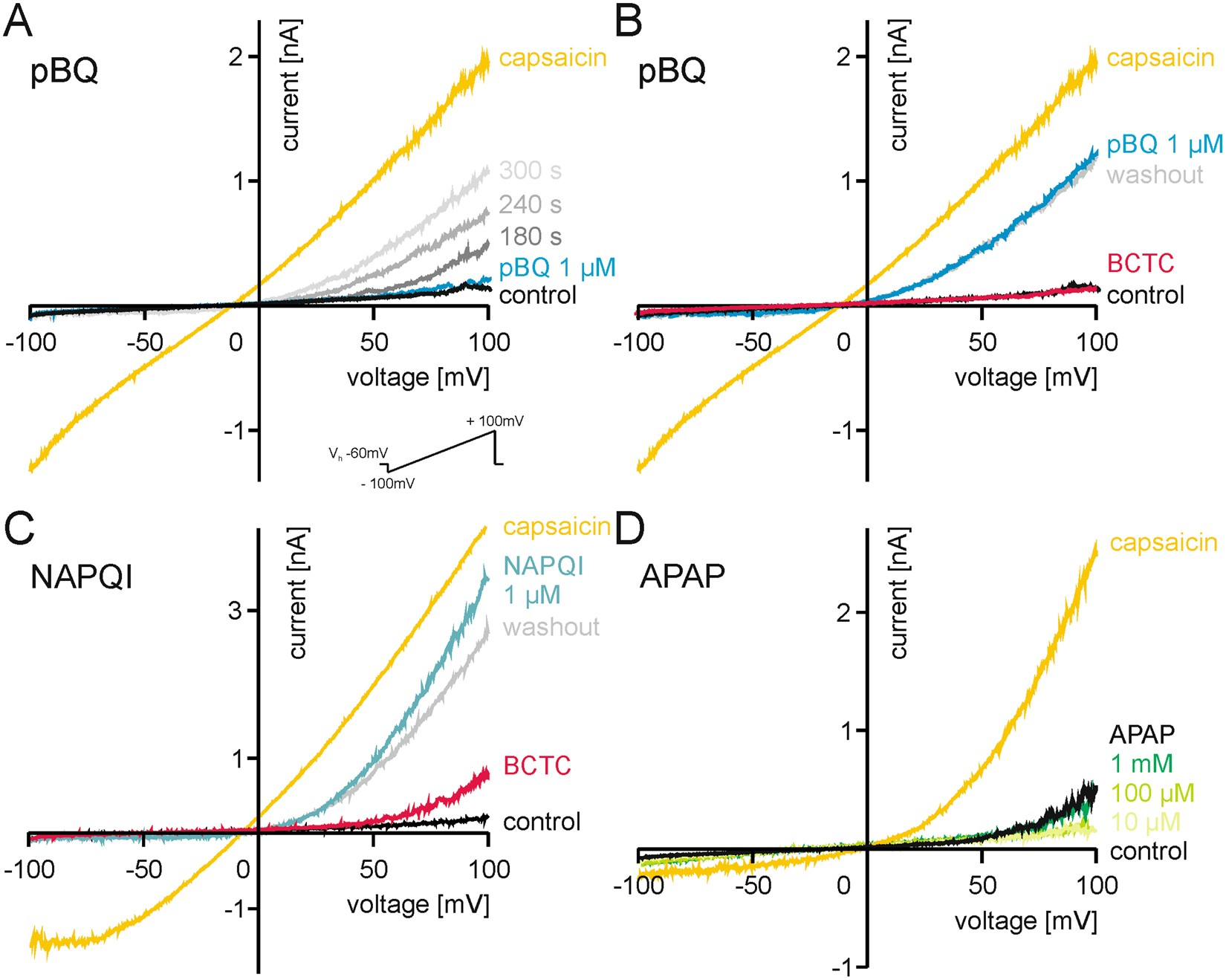 Reactive Metabolites Of Acetaminophen Activate And Sensitize The 4single K Type Thermocouple Amplifier Digital Converter Circuit Capsaicin Receptor Trpv1 Scientific Reports