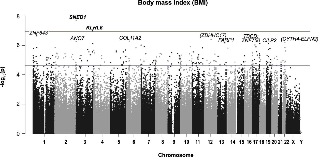 DNA-Methylation and Body Composition in Preschool Children