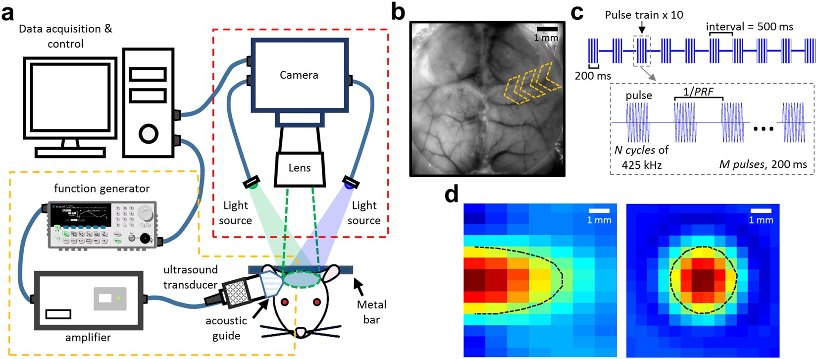 Monitoring Cerebral Hemodynamic Change During Transcranial 25 Khz Ultrasound Transducer Electronics And Electrical Engineering Stimulation Using Optical Intrinsic Signal Imaging Scientific Reports