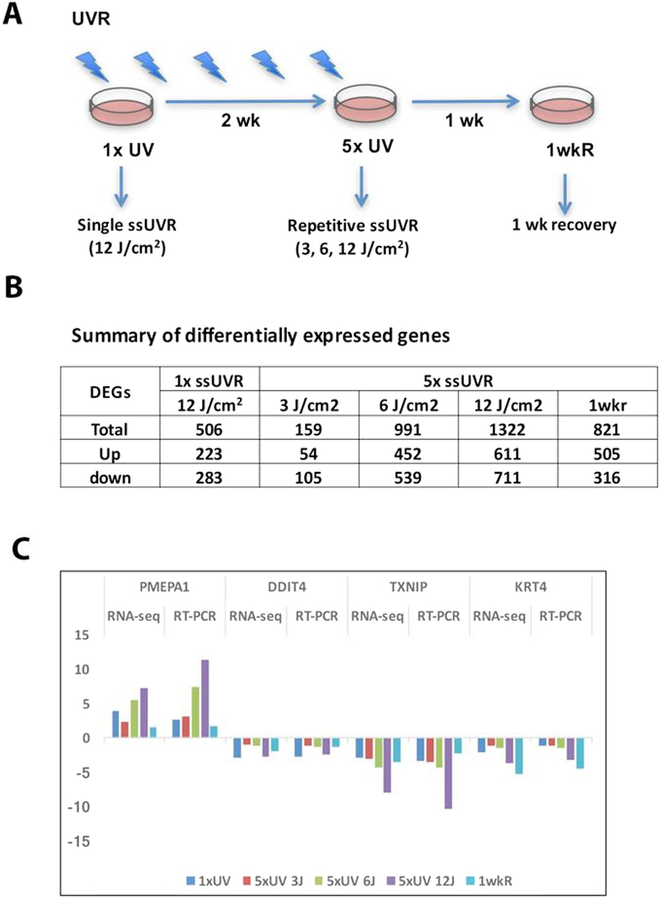 Transcription factors and stress response gene alterations in human  keratinocytes following Solar Simulated Ultra Violet Radiation  a5d6ac35e2