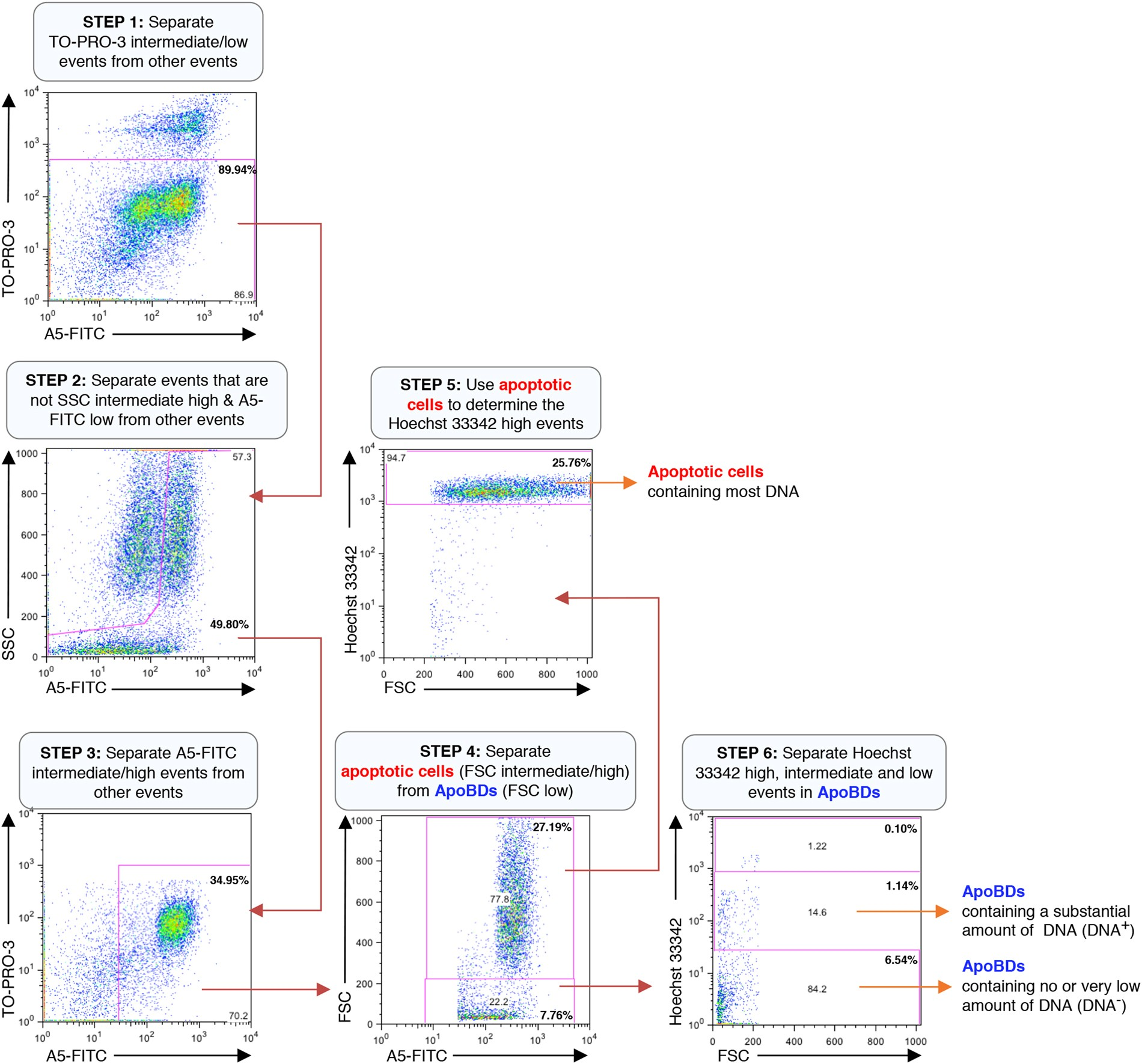 Determining The Contents And Cell Origins Of Apoptotic Bodies By No Disassemble Stephanie Because To Be Disassembled Is Dead That Flow Cytometry Scientific Reports