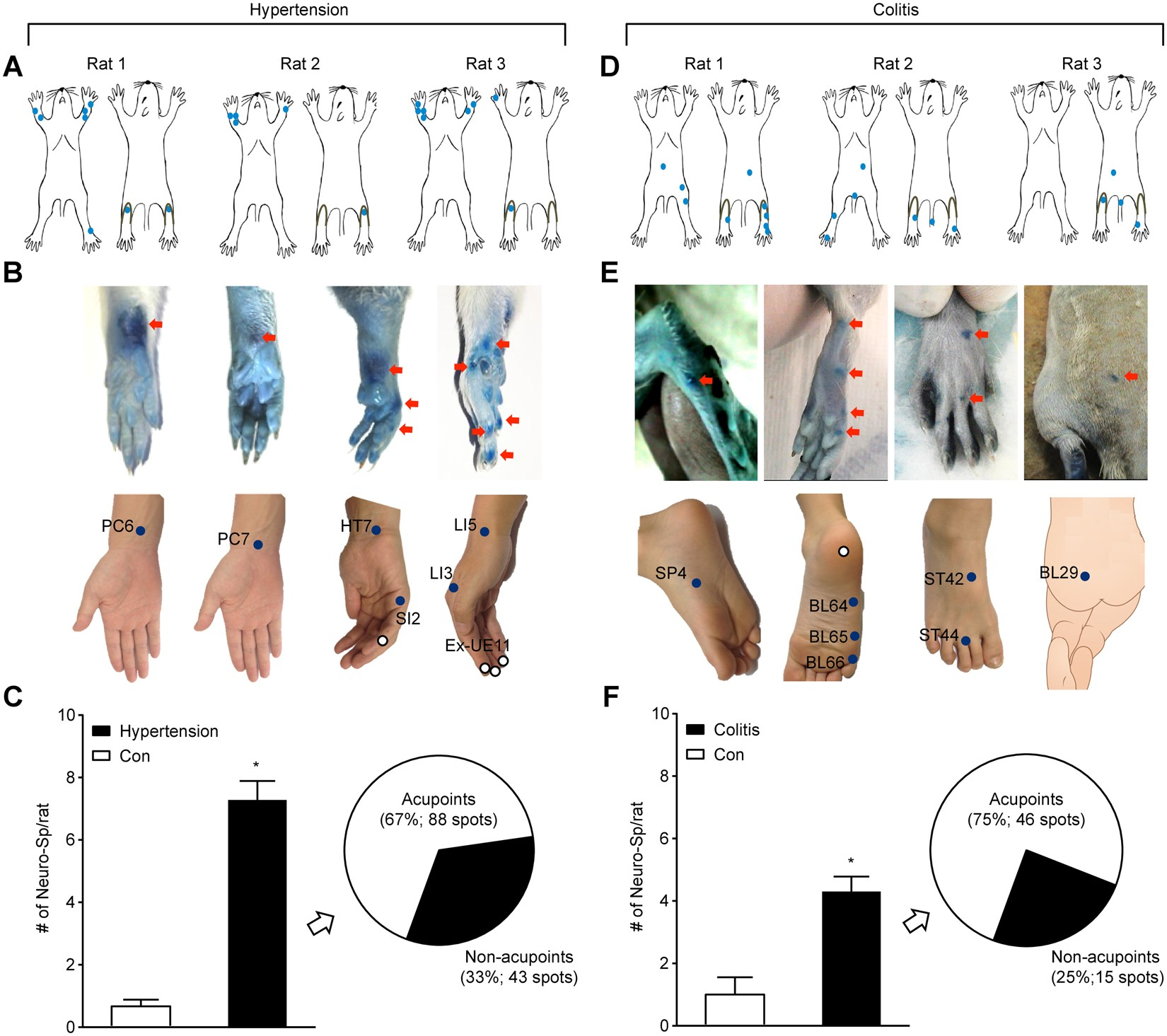Acupuncture points can be identified as cutaneous neurogenic