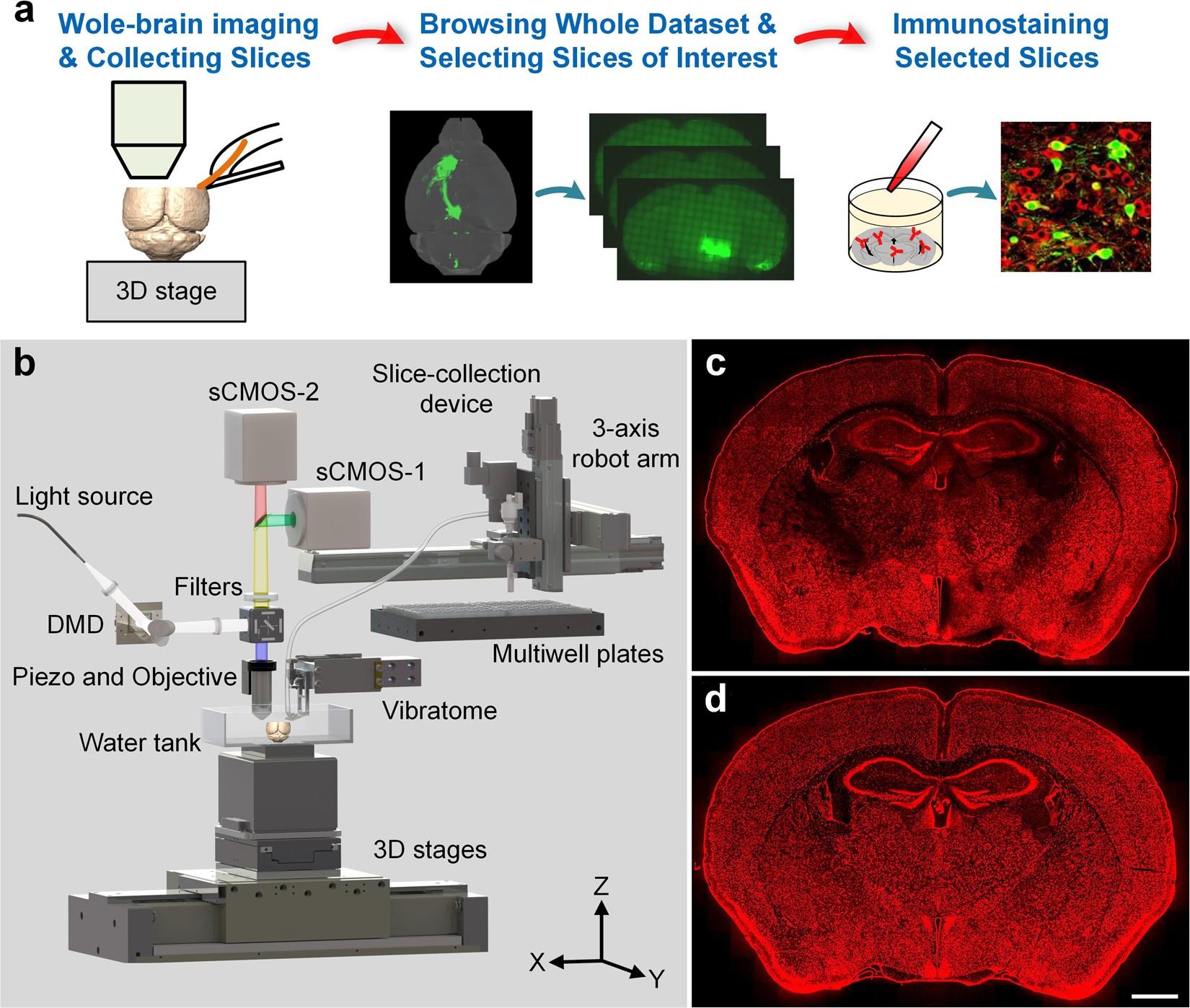 A Platform For Efficient Identification Of Molecular Phenotypes Of