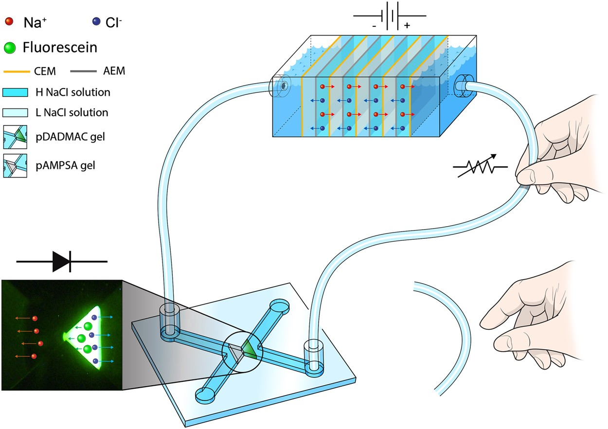 Ionic Circuits Powered by Reverse Electrodialysis for an