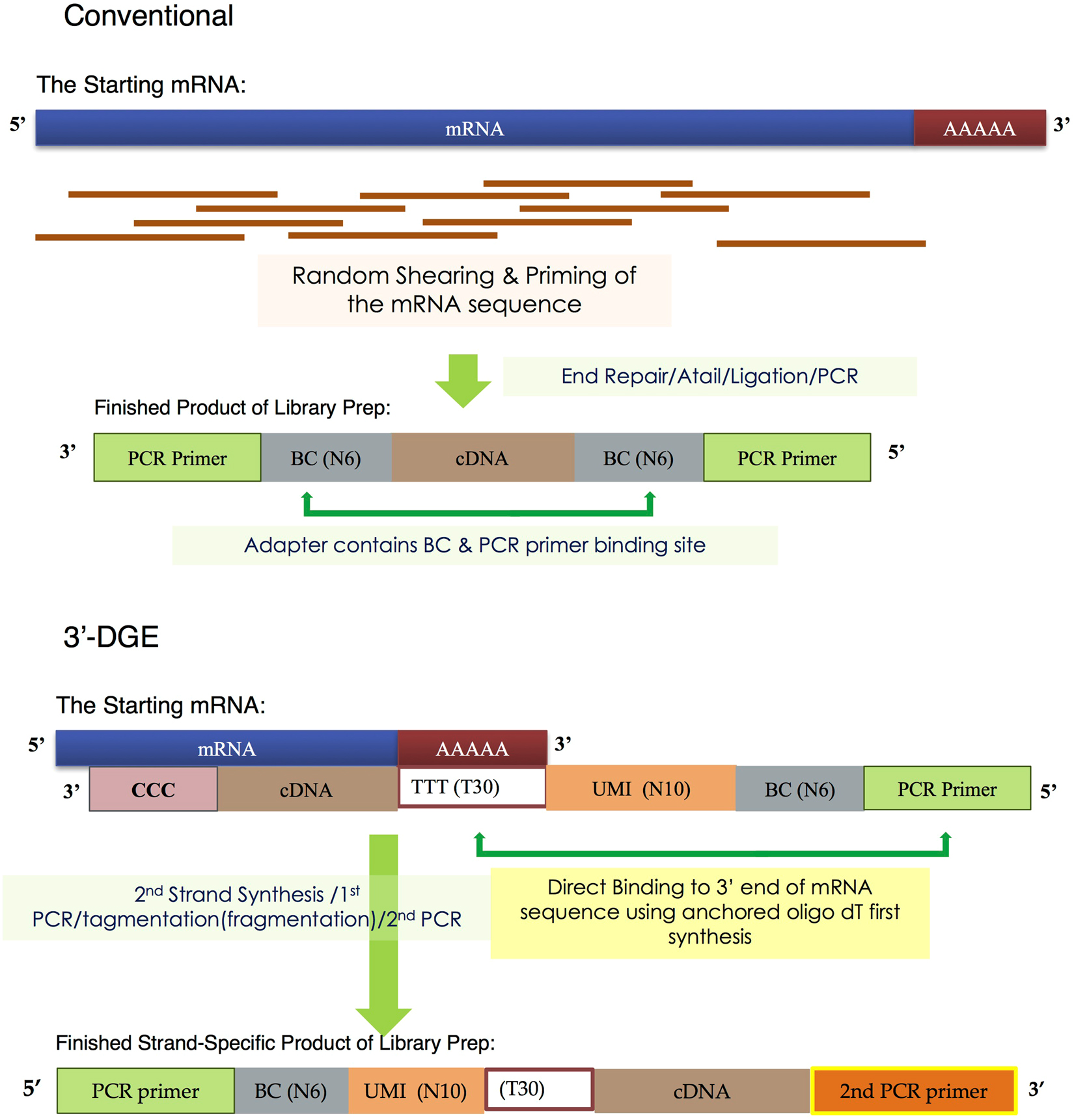 A Comparison of mRNA Sequencing with Random Primed and 3