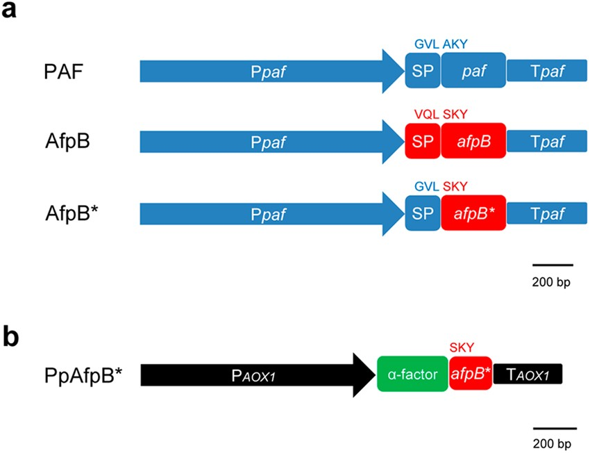 Efficient production and characterization of the novel and highly active antifungal protein AfpB from Penicillium digitatum   Scientific Reports