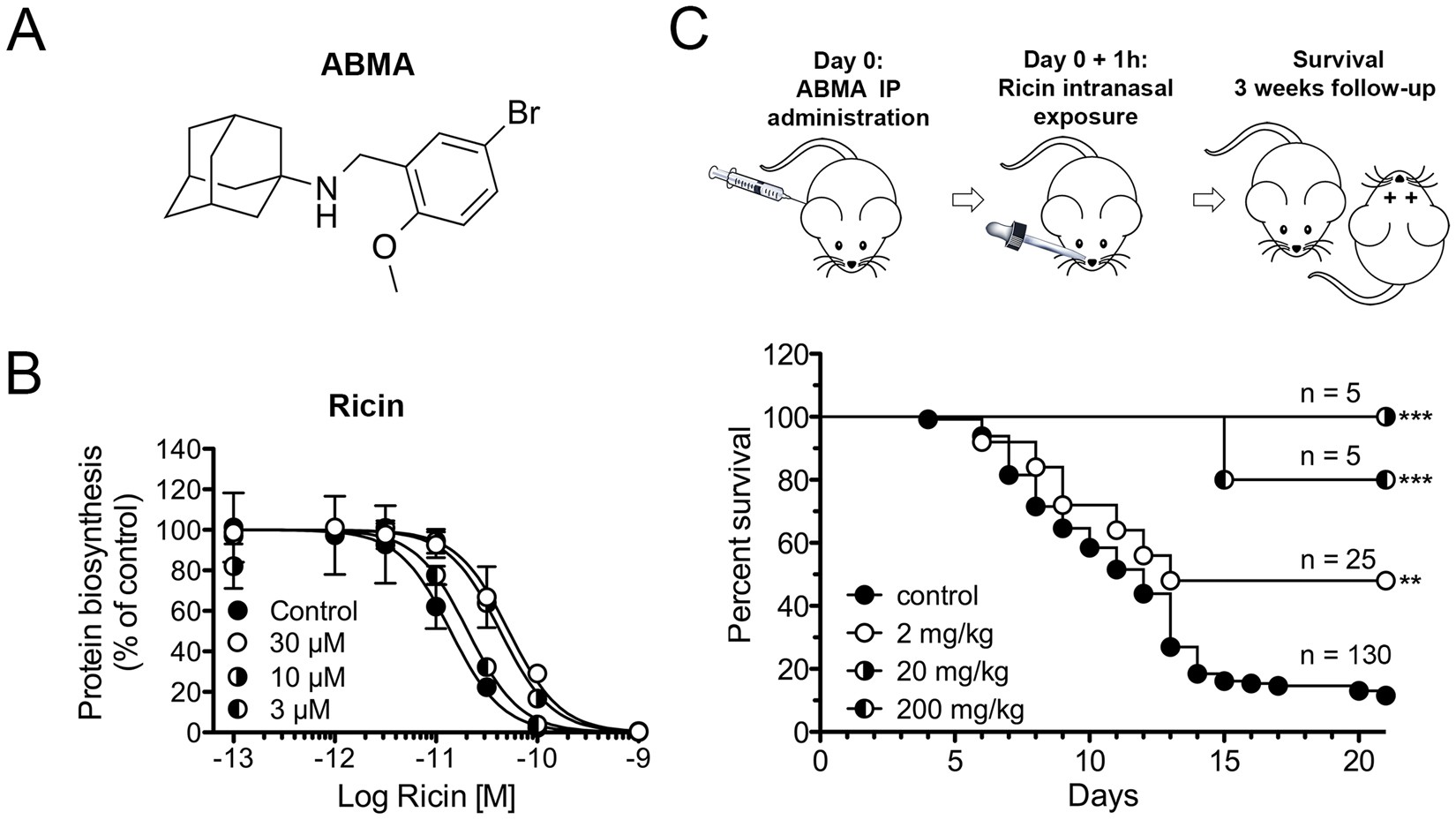 Abma A Small Molecule That Inhibits Intracellular Toxins And 2001 Audi Canada Ur S6 Main Fuse Box Diagram Pathogens By Interfering With Late Endosomal Compartments Scientific Reports