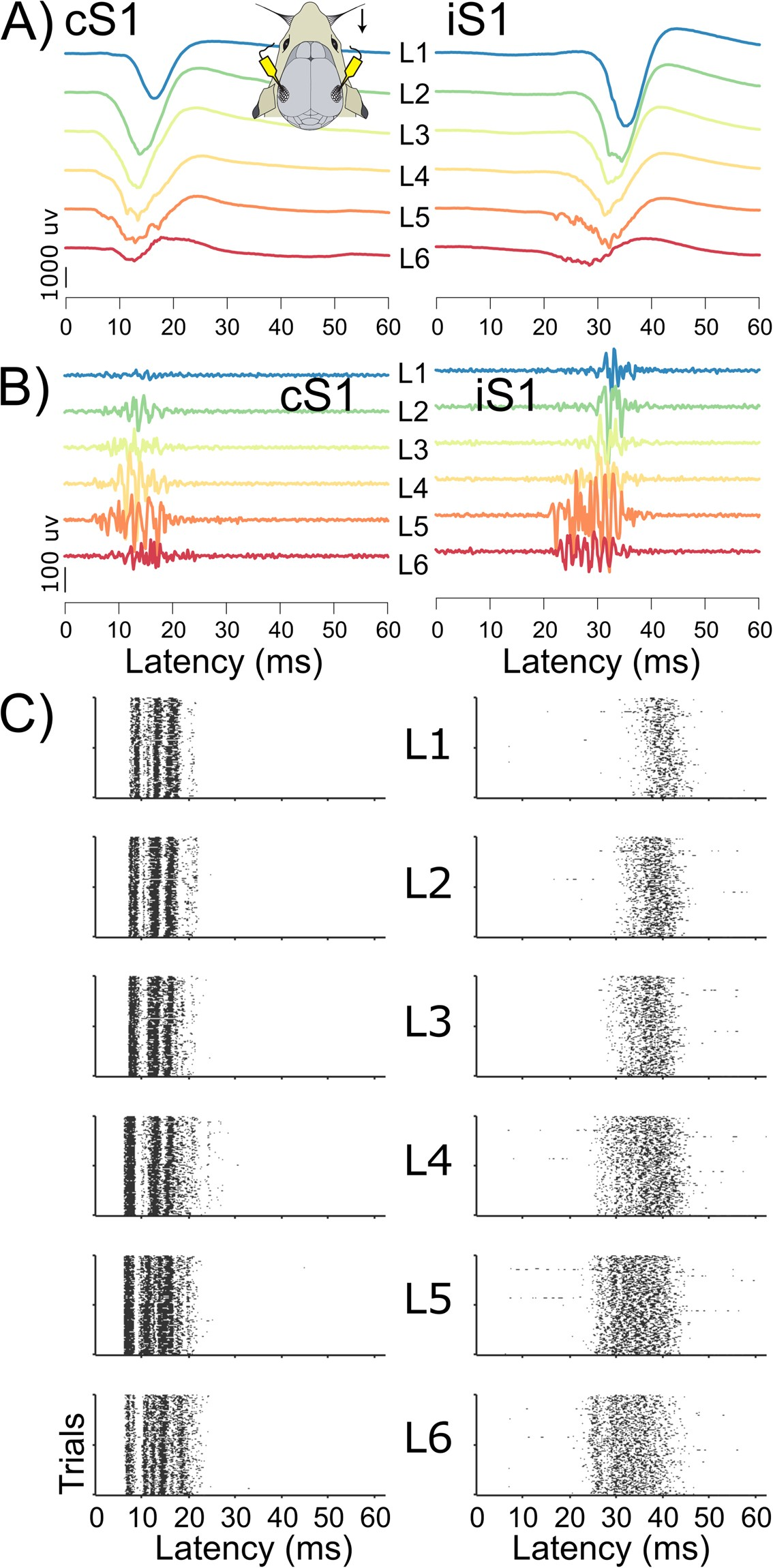 Systematic Population Spike Delays Across Cortical Layers Within And Menu Power Off Time Delay Relay The Two Circuits Below Between Primary Sensory Areas Scientific Reports