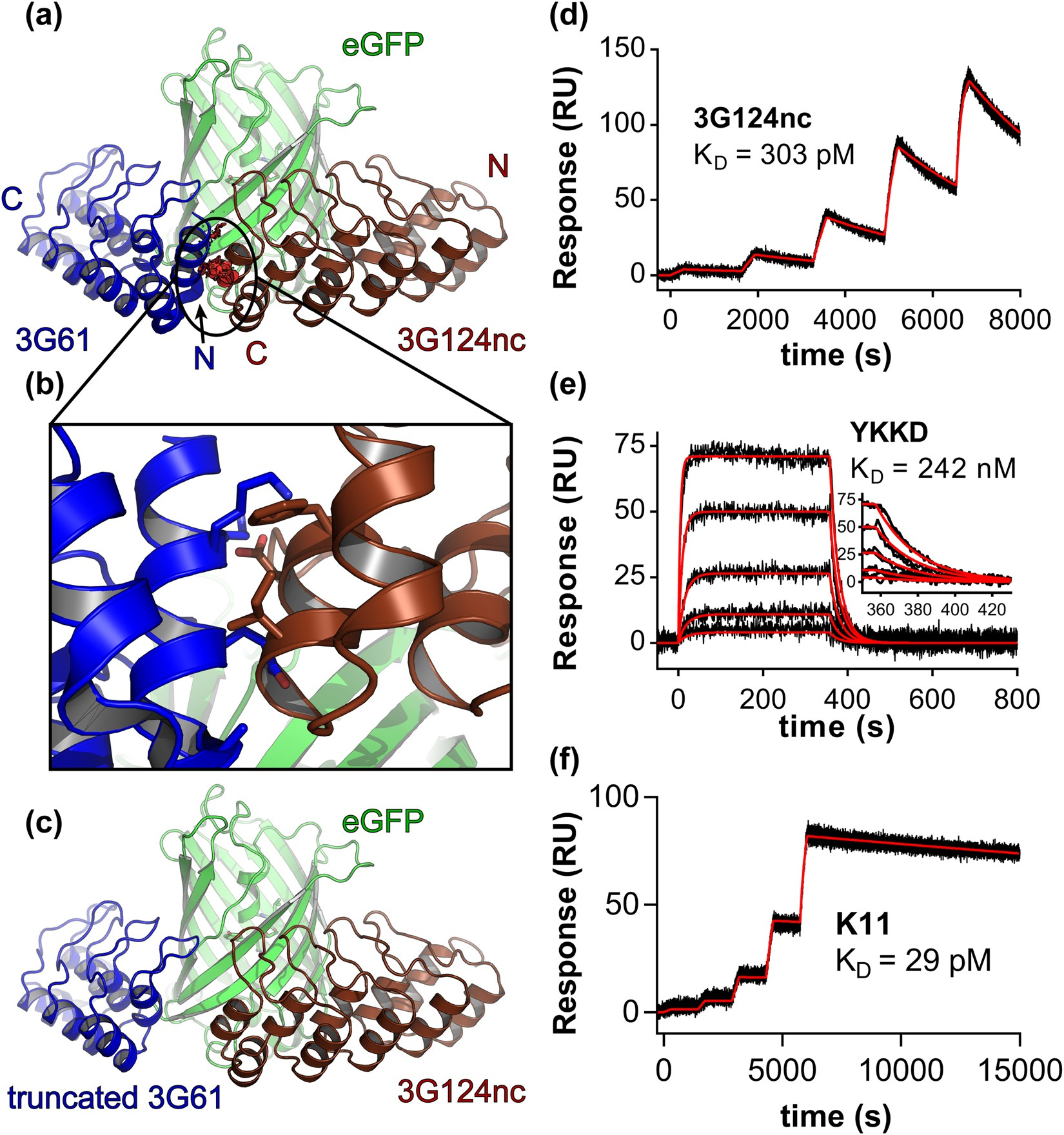 design and applications of a clamp for green fluorescent protein