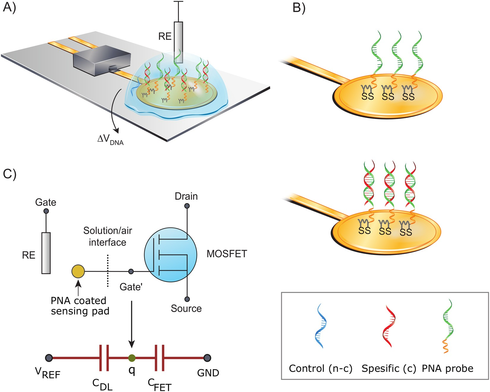 Real-time wash-free detection of unlabeled PNA-DNA hybridization using  discrete FET sensor | Scientific Reports