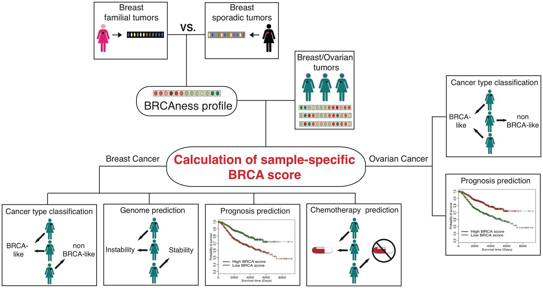 Computational Investigation Of Homologous Recombination Dna Repair Interactive Voltage Divider Calculator Conceptselectronicscom Deficiency In Sporadic Breast Cancer Scientific Reports