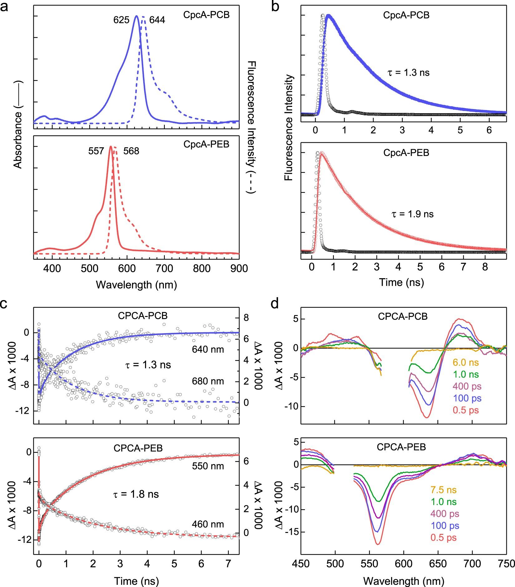 repurposing a photosynthetic antenna protein as a super resolution
