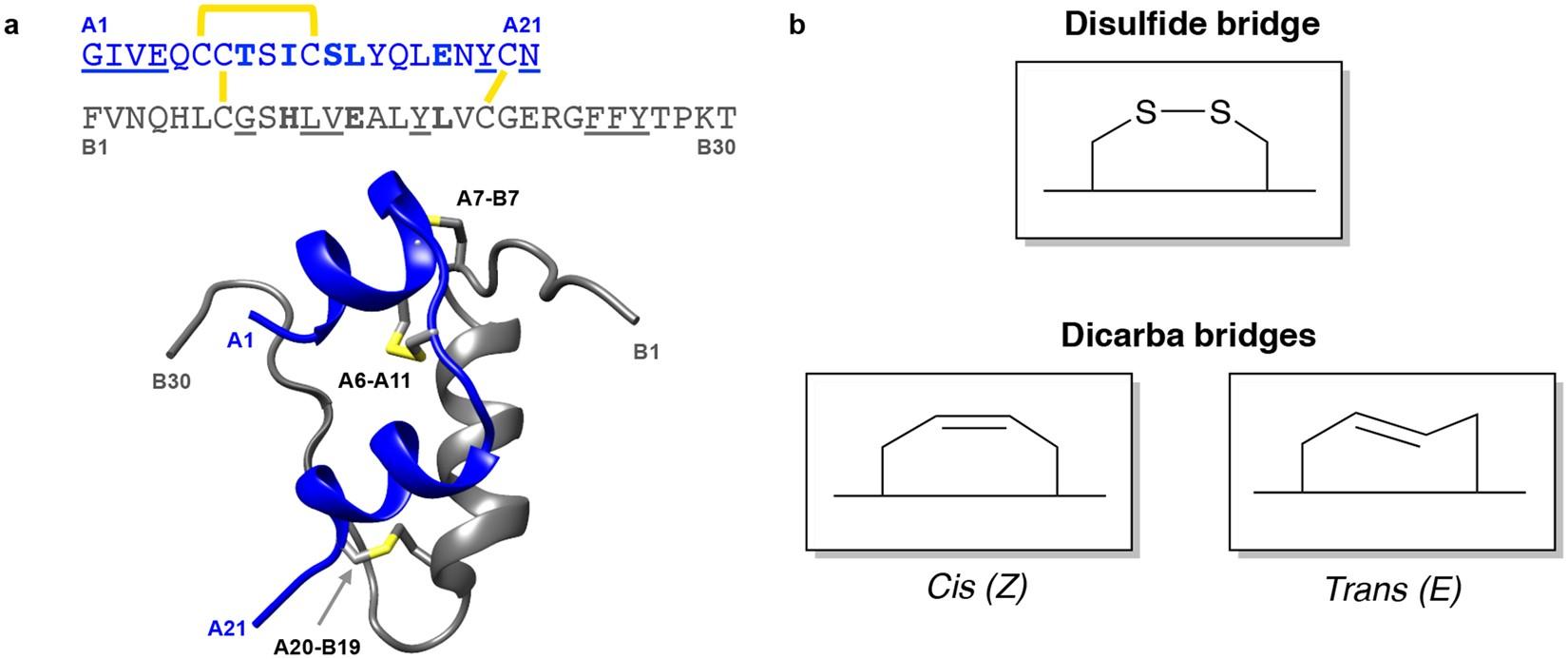 Insulin in motion: The A6-A11 disulfide bond allosterically