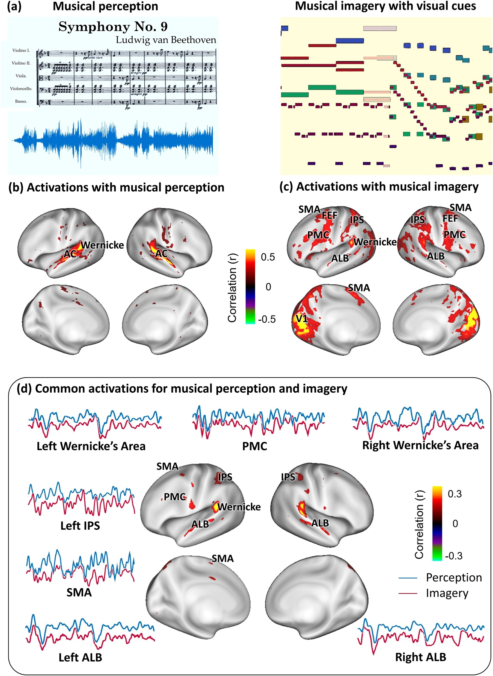 Musical imagery involves wernickes area in bilateral and anti musical imagery involves wernickes area in bilateral and anti correlated network interactions in musicians scientific reports fandeluxe Gallery