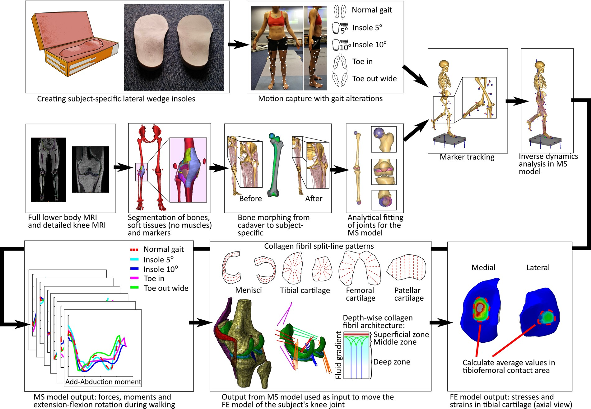 Workflow Assessing The Effect Of Gait Alterations On Stresses In Freebody Diagrams Be Body Segments Involved This Movement Medial Tibial Cartilage Combined Musculoskeletal Modelling And Finite Element