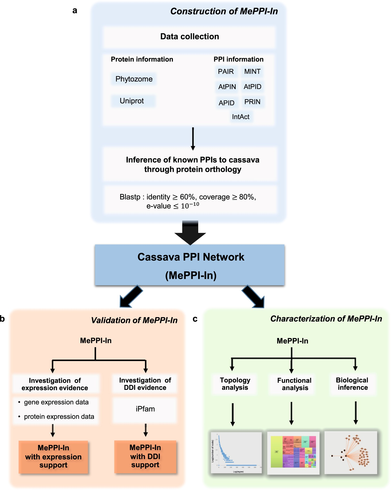 Prediction of cassava protein interactome based on interolog