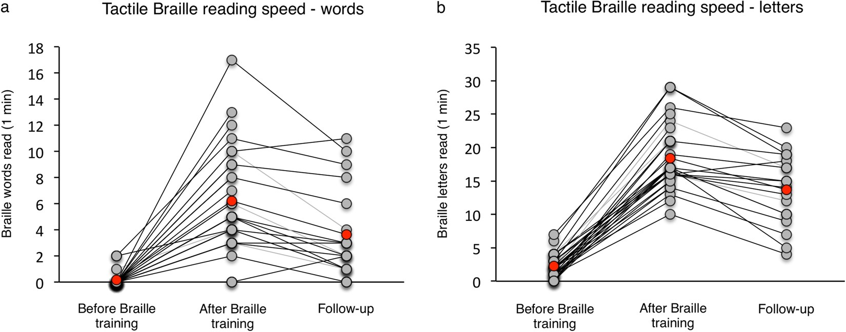 Structural Reorganization Of The Early Visual Cortex Following Fdt Holder Motor Universal Braille Training In Sighted Adults Scientific Reports