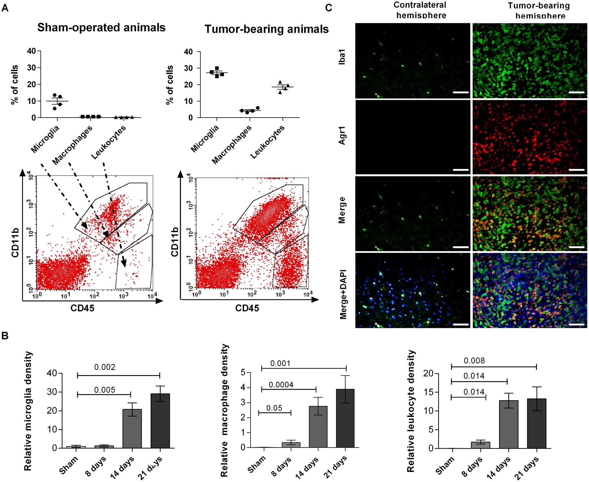 Immune microenvironment of experimental rat C6 gliomas resembles