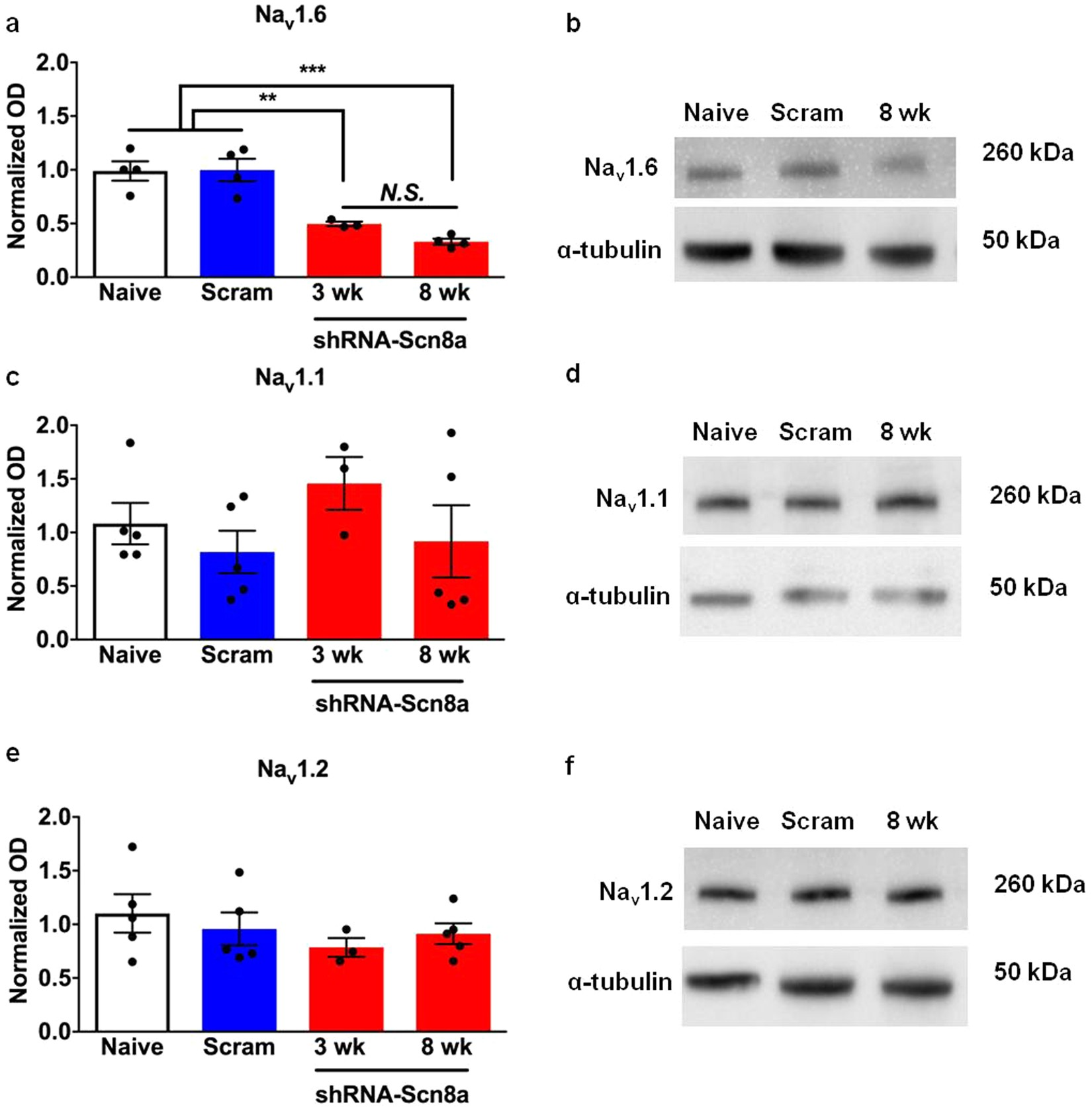 Selective targeting of Scn8a prevents seizure development in a mouse
