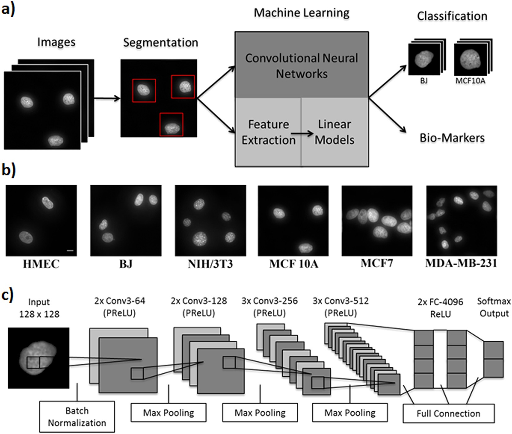 Machine Learning for Nuclear Mechano-Morphometric Biomarkers