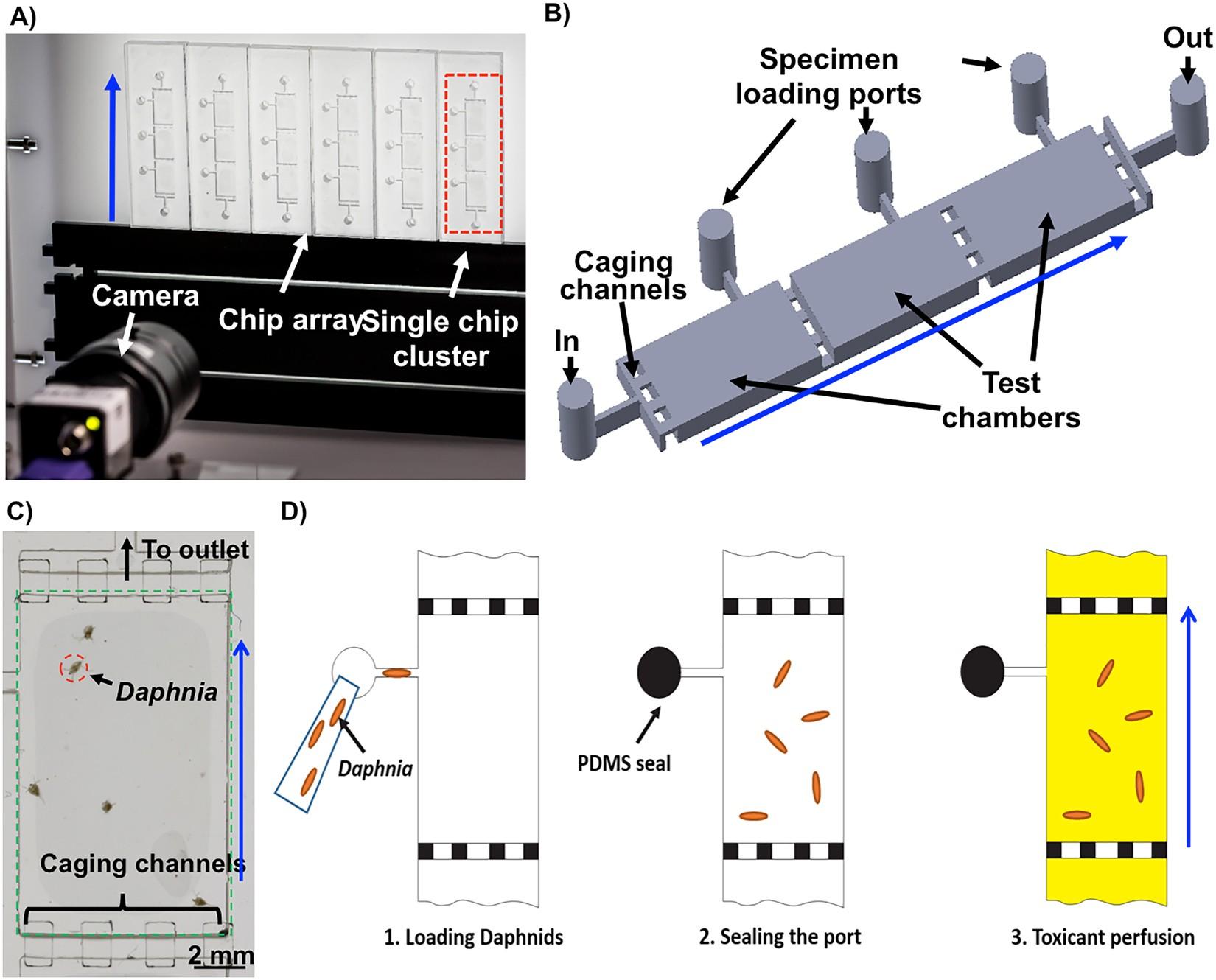 A Millifluidic System For Analysis Of Daphnia Magna Locomotory