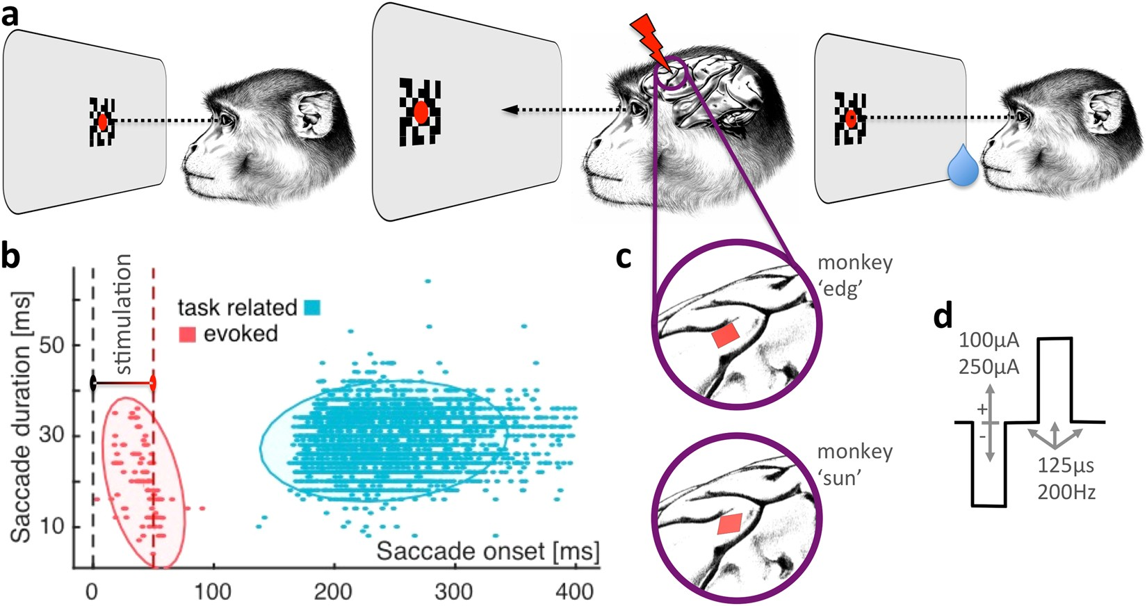 Electrical stimulation of macaque lateral prefrontal cortex