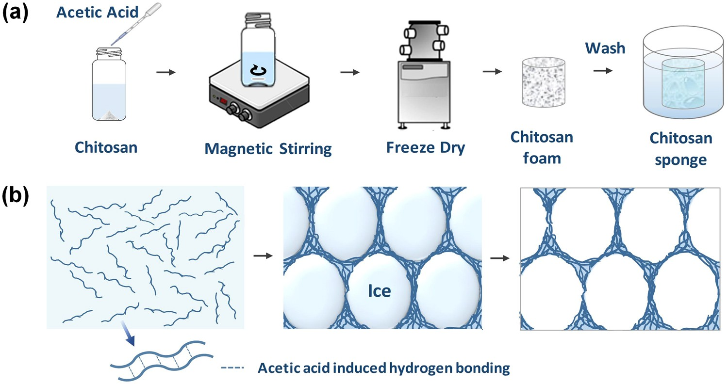 Hierarchical porous chitosan sponges as robust and recyclable hierarchical porous chitosan sponges as robust and recyclable adsorbents for anionic dye adsorption scientific reports pooptronica Image collections