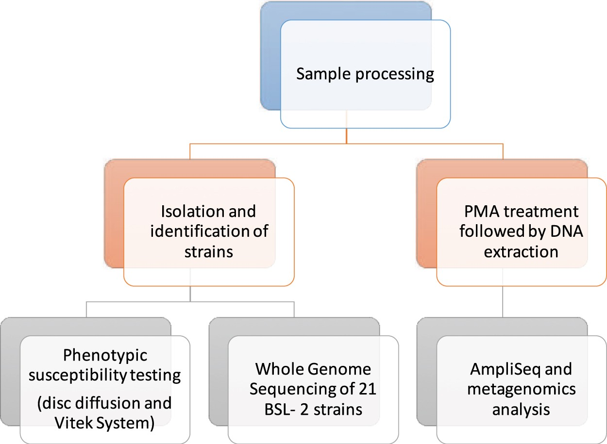 Detection of antimicrobial resistance genes associated with