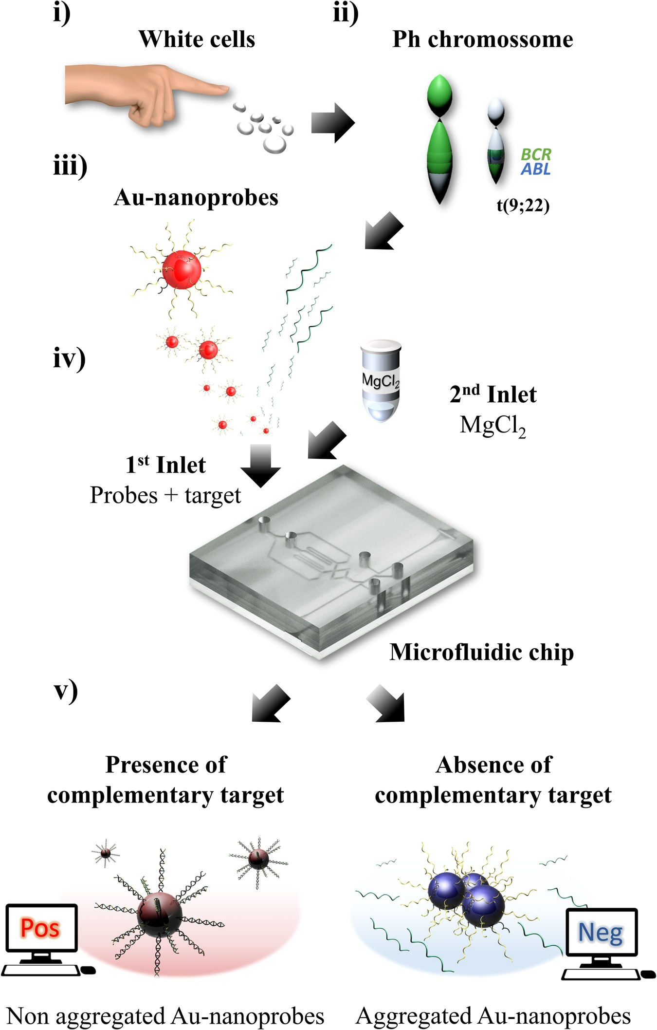 Multifunctional Microfluidic Chip For Optical Nanoprobe Based Rna Also Download Autocad Electrical 2013 Control Designers Detection Application To Chronic Myeloid Leukemia Scientific Reports