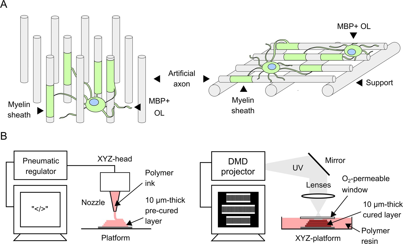 Engineered 3d Printed Artificial Axons Scientific Reports Engineering Schematics Plasma Flat Screen