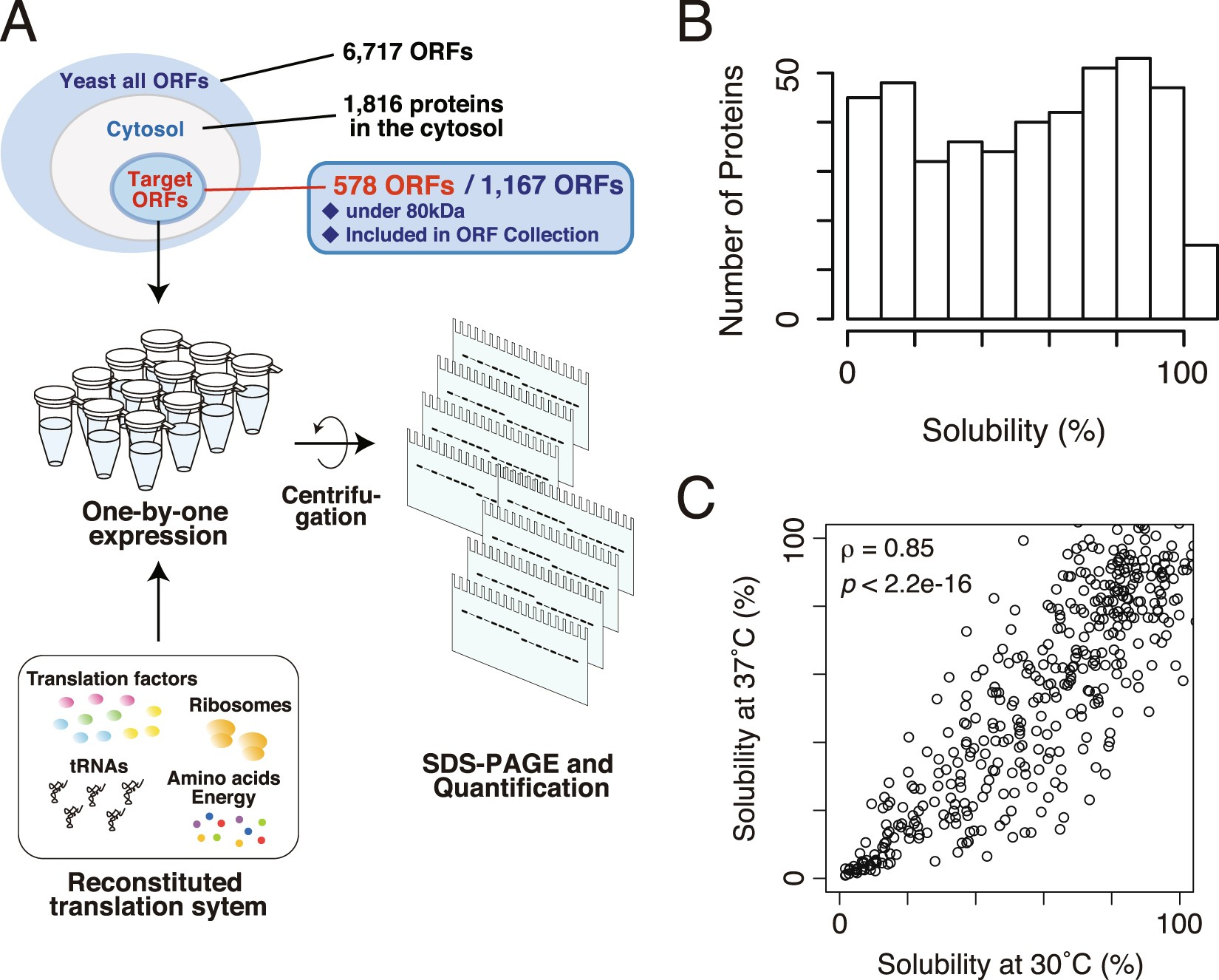 Large Scale Aggregation Analysis Of Eukaryotic Proteins Reveals An
