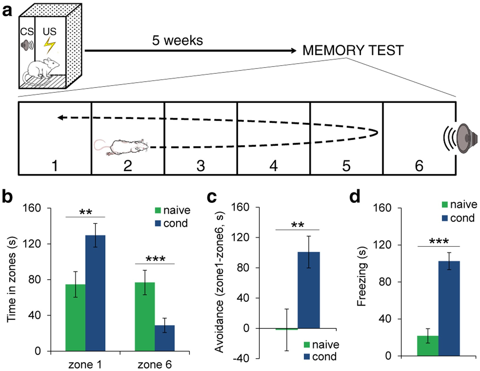 Lateral And Basal Amygdala Account For Opposite Behavioral Responses About Series Parallel Or Even Circuits In Order To Solve The During Long Term Expression Of Fearful Memories Scientific Reports