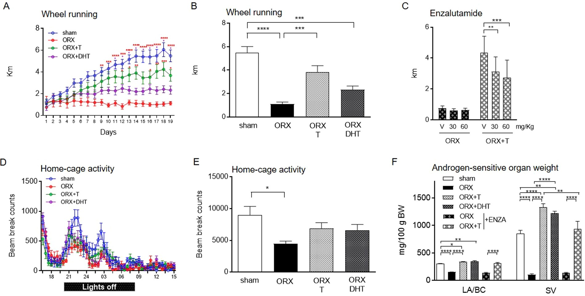 Testosterone boosts physical activity in male mice via
