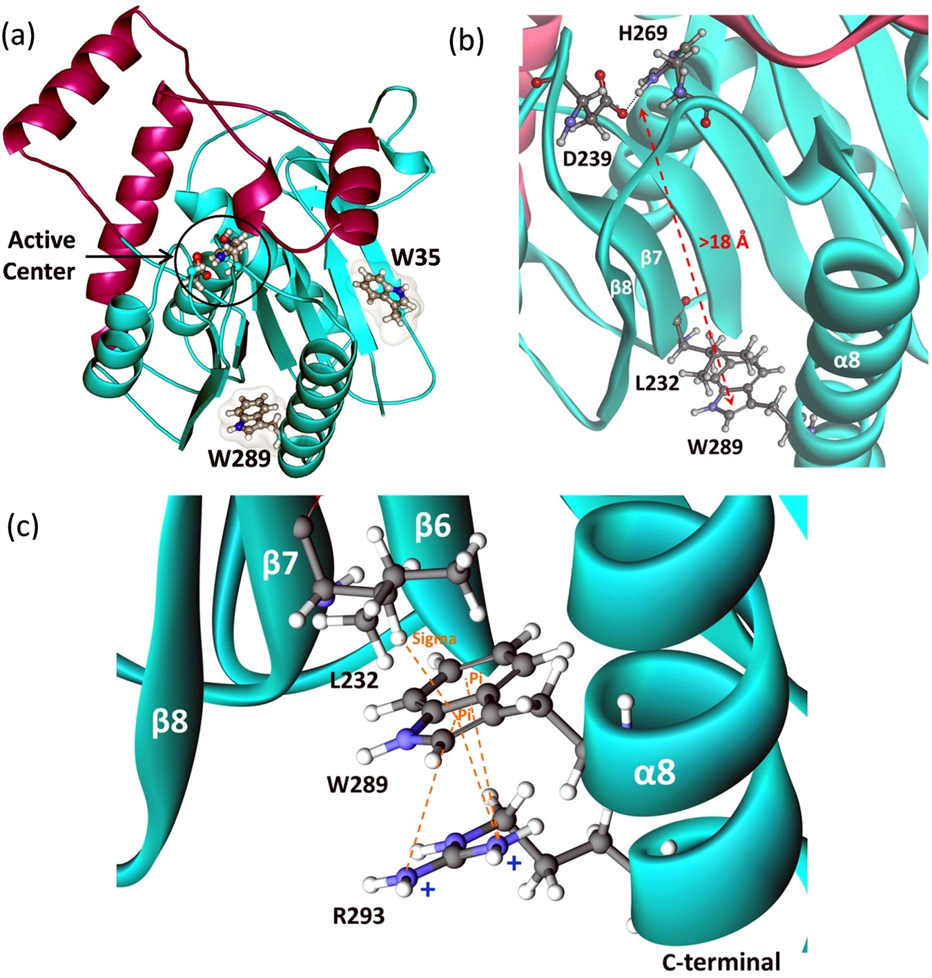 Effects of Distal Mutations on the Structure, Dynamics and ... on