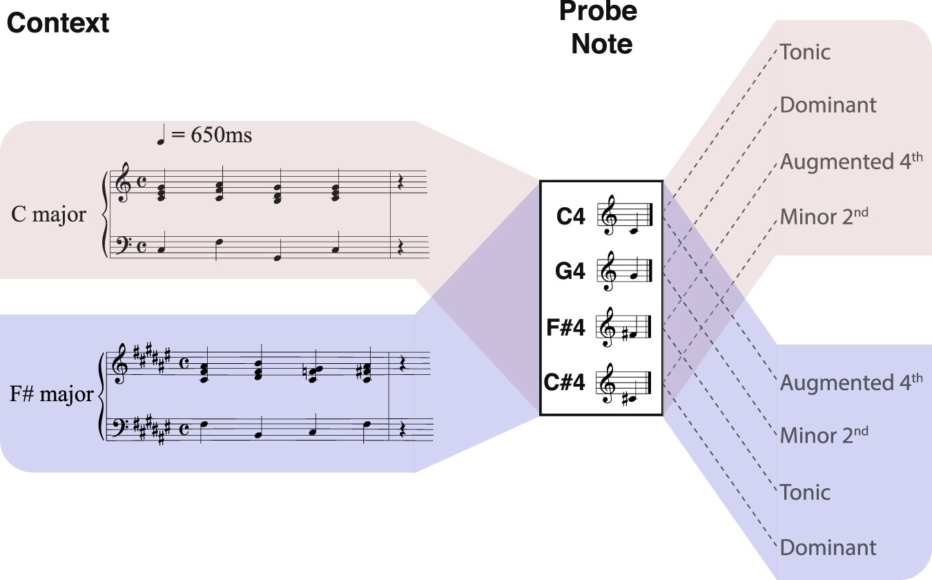 Understanding Music Of Neural >> Decoding The Dynamic Representation Of Musical Pitch From