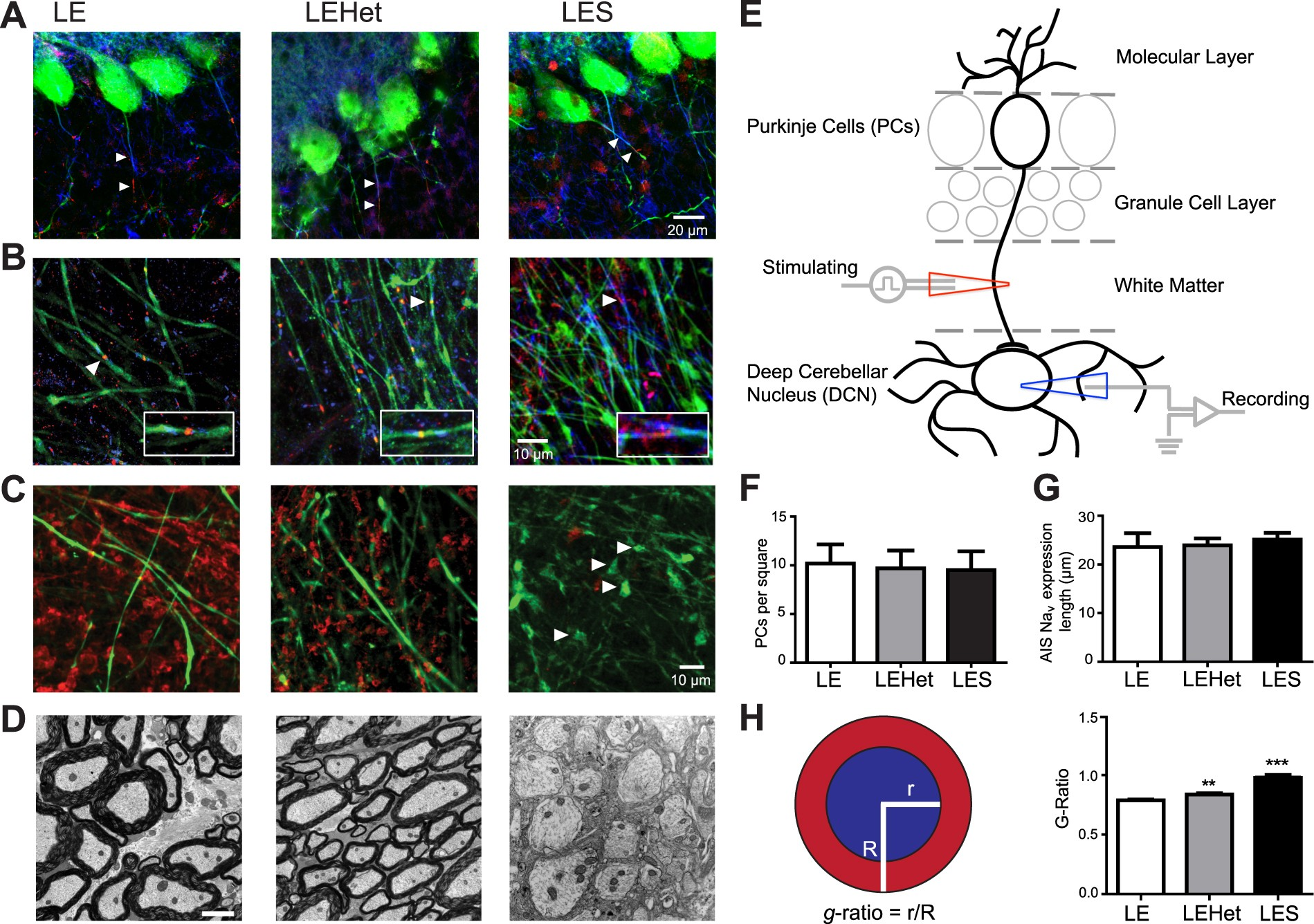 Myelination Of Purkinje Axons Is Critical For Resilient Synaptic Drz 400 2005 Wiring Diagram Transmission In The Deep Cerebellar Nucleus Scientific Reports