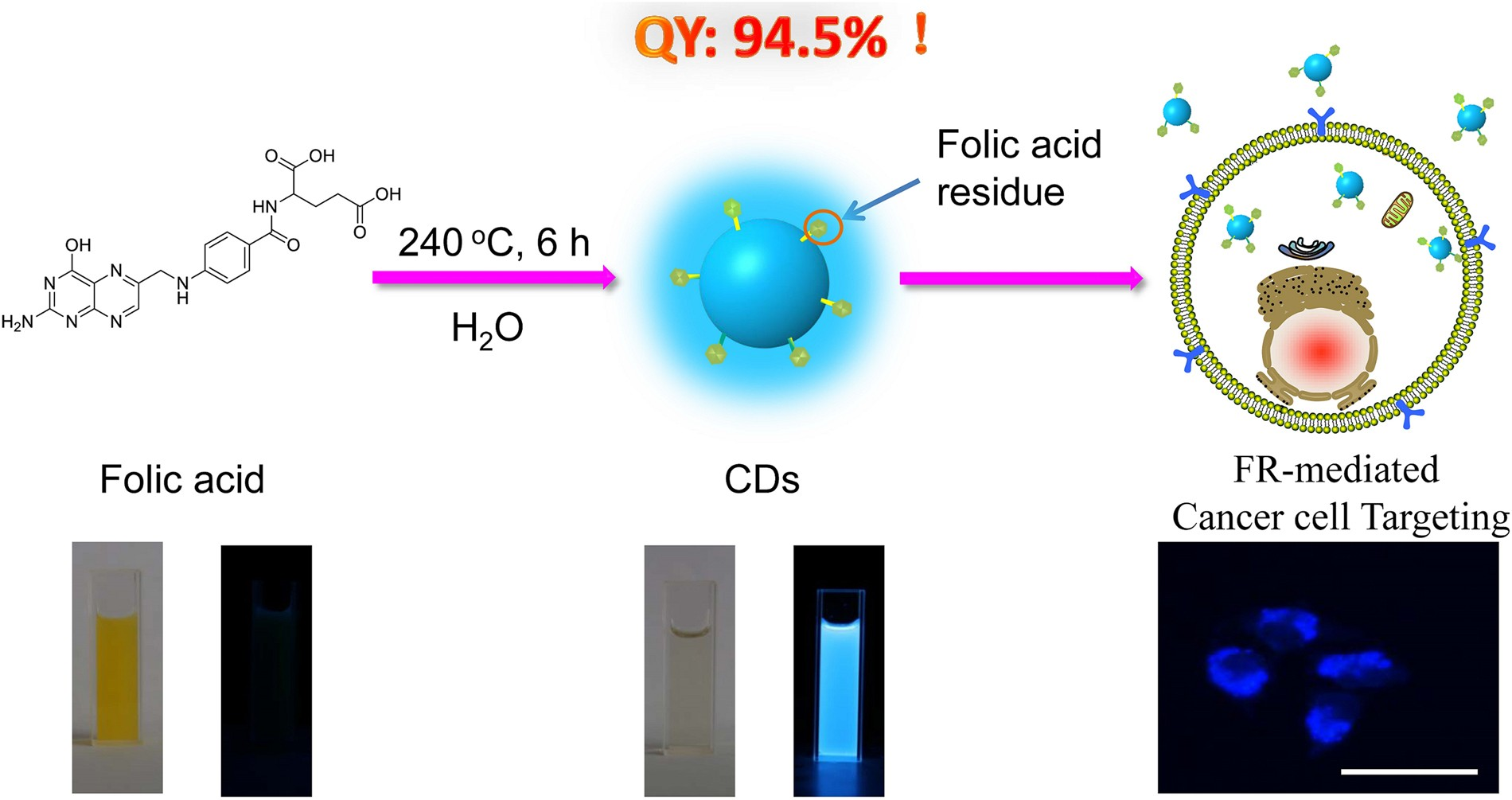Synthesis of Luminescent Carbon Dots with Ultrahigh Quantum Yield and  Inherent Folate Receptor-Positive Cancer Cell Targetability | Scientific  Reports