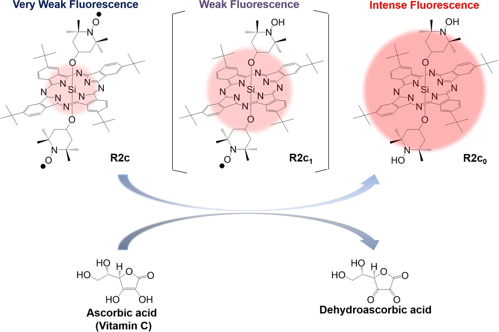 In Vivo Fluorescence Bioimaging Of Ascorbic Acid Mice V C Injection Original Per Box Development An Efficient Probe Consisting Phthalocyanine Tempo And Albumin Scientific