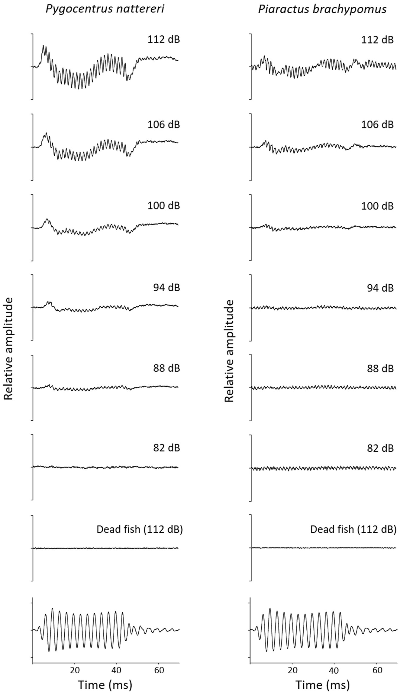 Hearing Capacities And Morphology Of The Auditory System In J 4020 24 Volt Wiring Serrasalmidae Teleostei Otophysi Scientific Reports