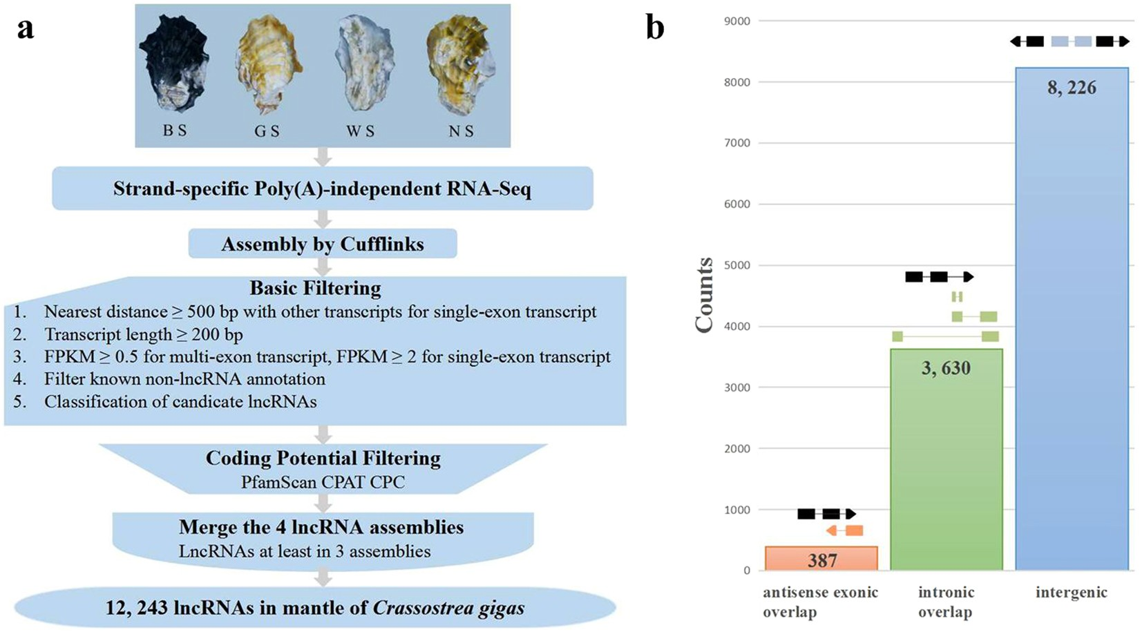Transcriptional profiling of long non-coding RNAs in mantle of ...