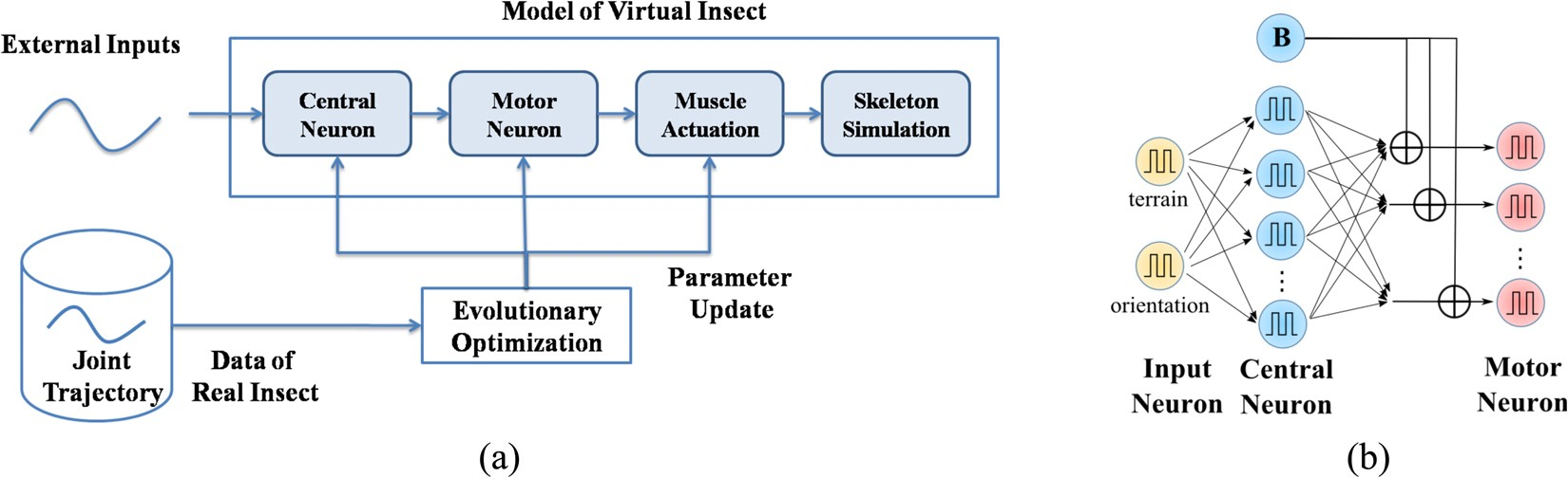 A Neuro Musculo Skeletal Model For Insects With Data Driven