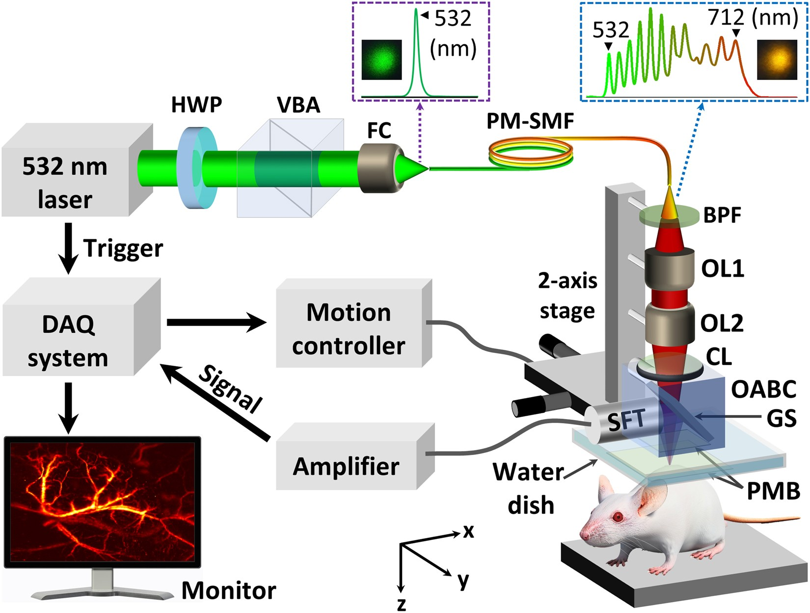 In vivo photoacoustic monitoring using 700-nm region Raman