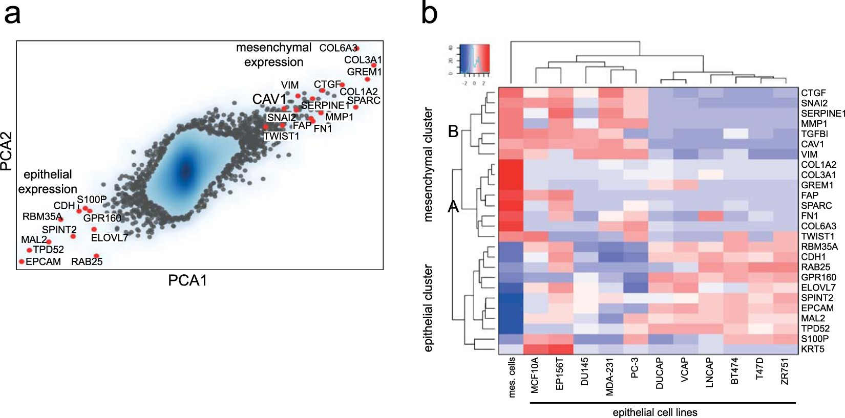 ITGB1-dependent upregulation of Caveolin-1 switches TGFβ signalling