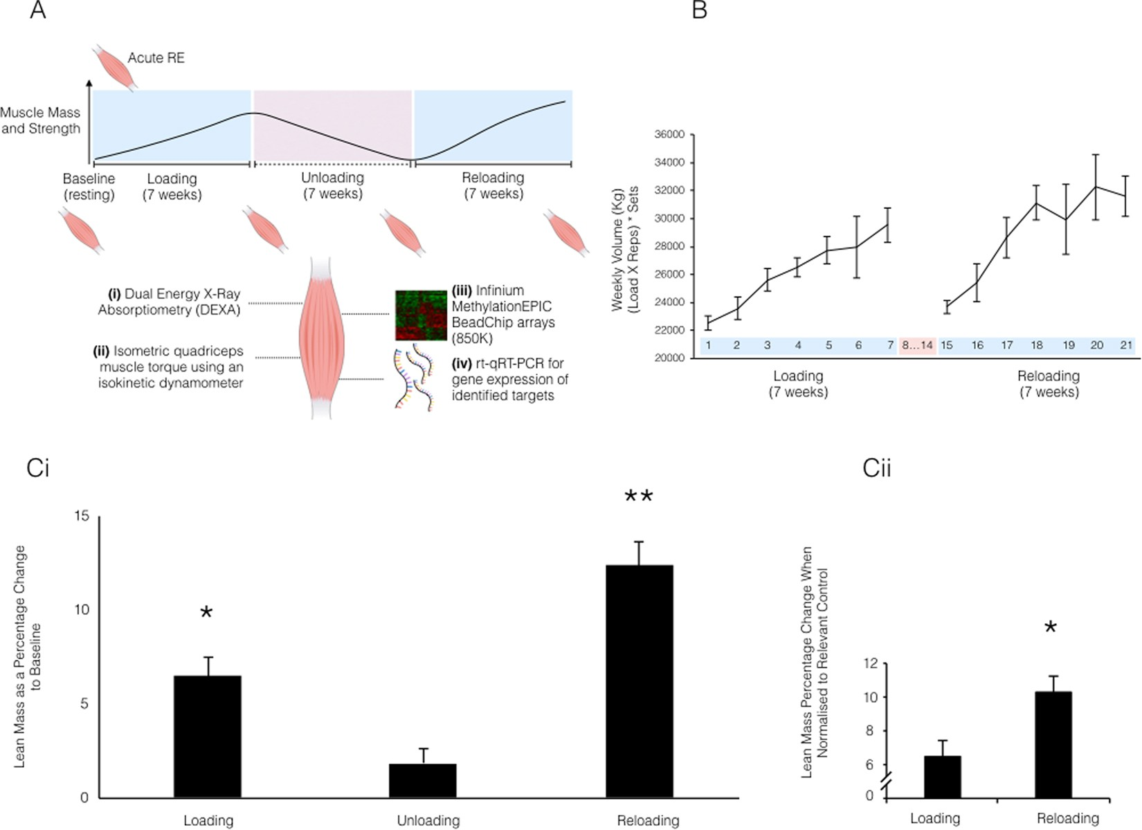 Human Skeletal Muscle Possesses An Epigenetic Memory Of Hypertrophy