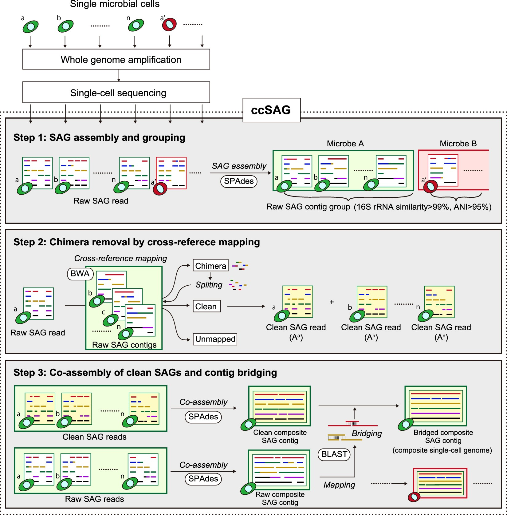 Obtaining high-quality draft genomes from uncultured microbes by