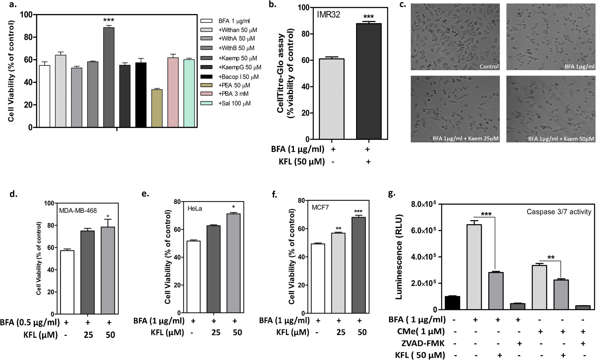 Kaempferol Mitigates Endoplasmic Reticulum Stress Induced Cell By Targeting Caspase 3 7 Scientific Reports
