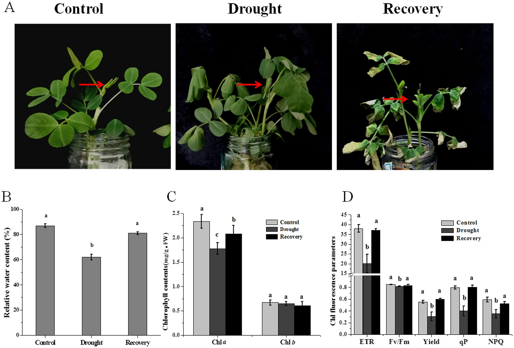 Photosynthesis contributes to plant growth by