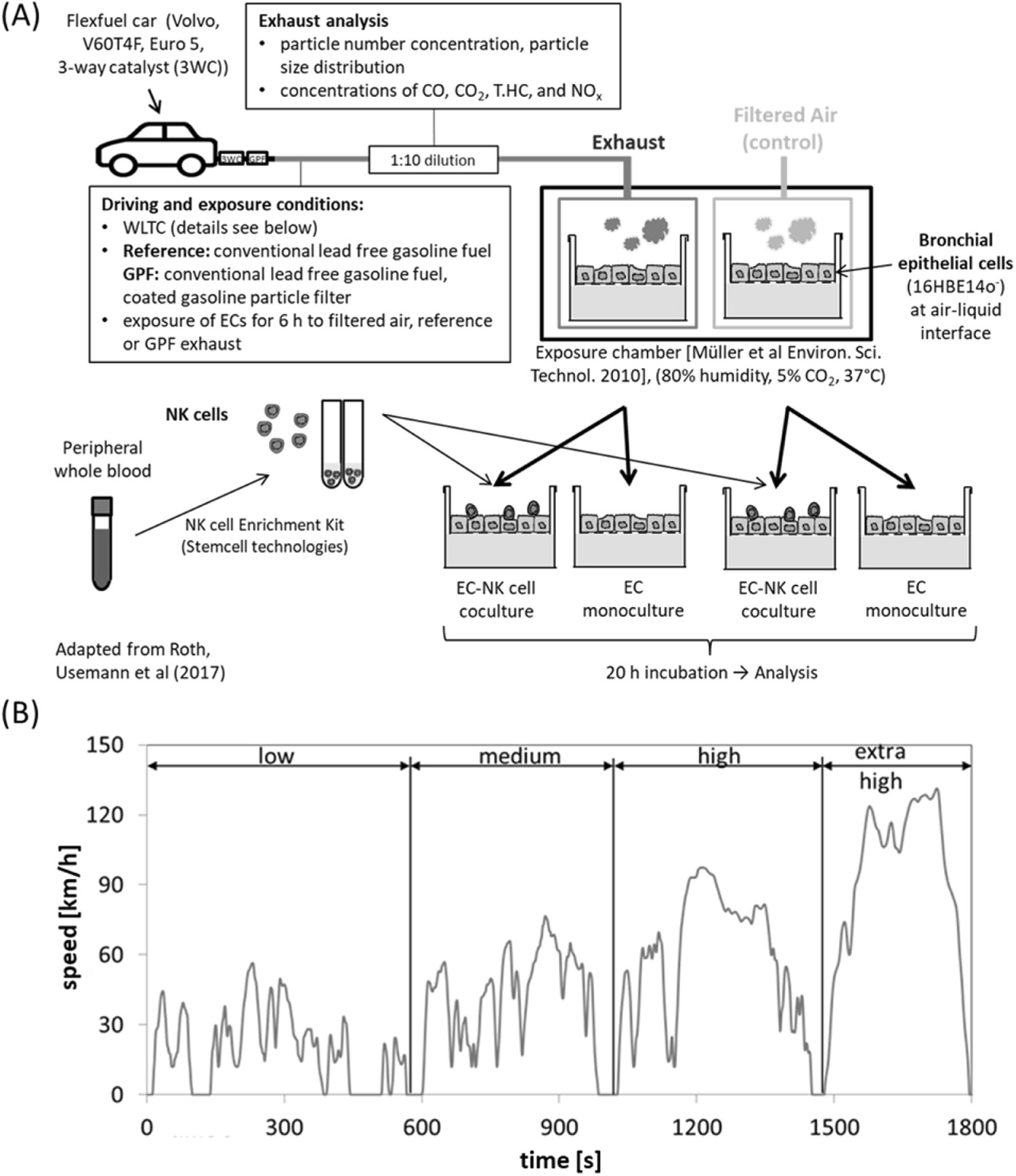 Gasoline Particle Filter Reduces Oxidative Dna Damage In Bronchial Case 530 Engine Diagram Epithelial Cells After Whole Exhaust Exposure Vitro Scientific Reports
